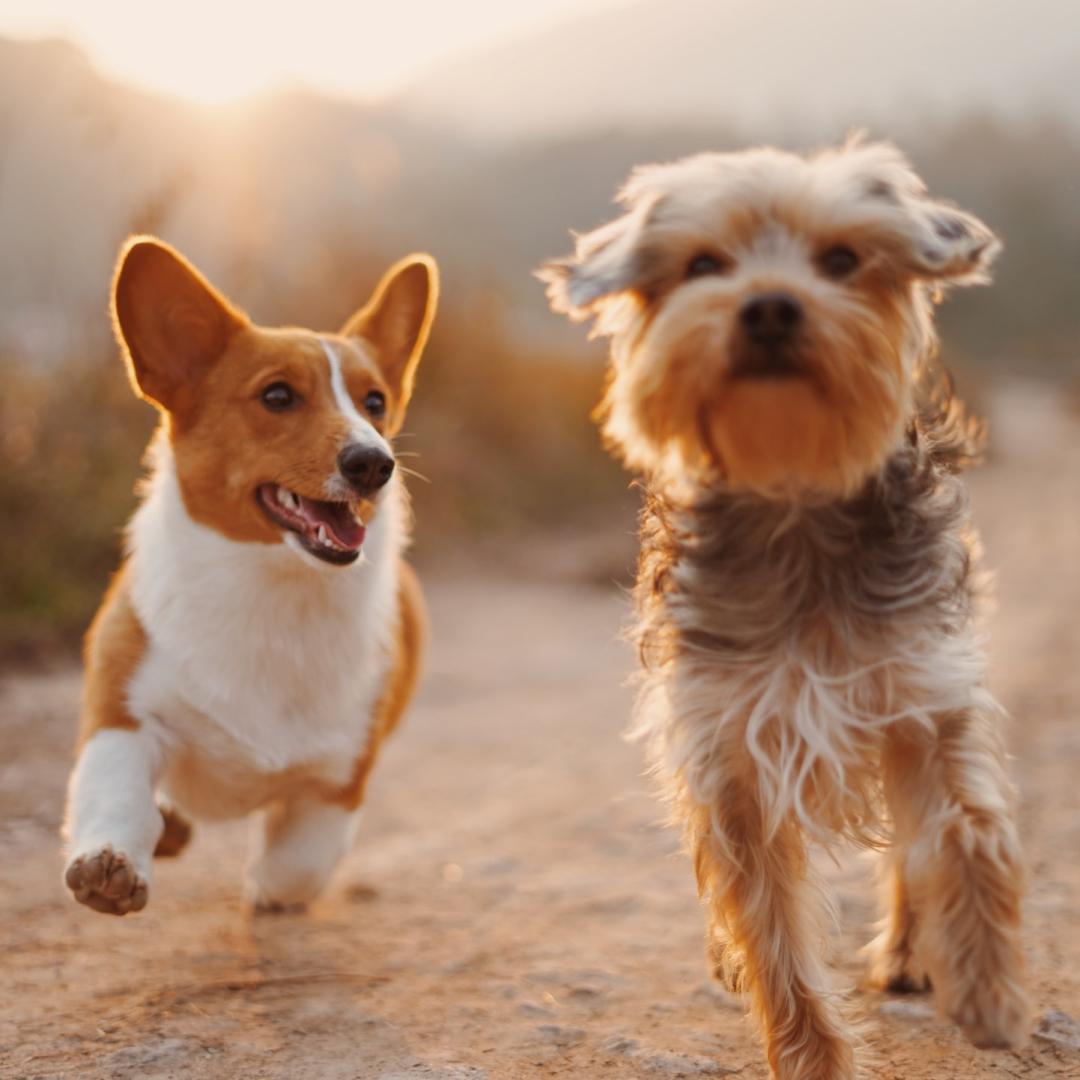 Deux chiens sur une terre déserte